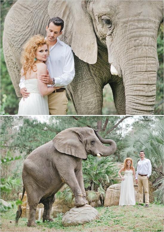 mariage-dans-le-zoo